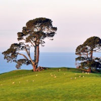 Living like a local: why you ought to try our Tauranga day tours